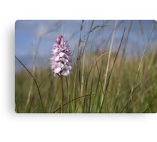 Spotted Orchid,  Portnoo, Co. Donegal Canvas Print