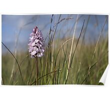 Spotted Orchid,  Portnoo, Co. Donegal Poster