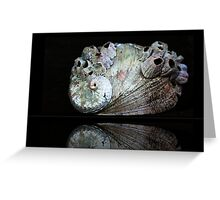 Barnacles on a Seashell  Greeting Card
