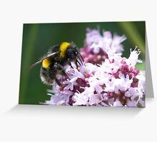 White Tailed Worker Bumble Bee Greeting Card