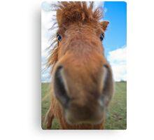 Shetland Pony Says Hi Canvas Print