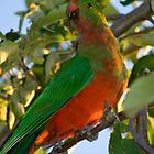 King Parrot by Deborah McGrath