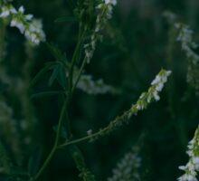 White Flowers Blooming in Dark Green Grass Sticker