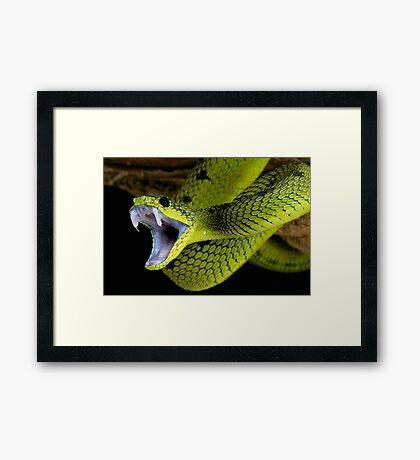 Fangs Green Snake Framed Print