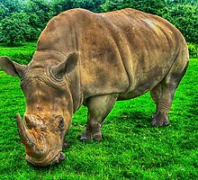 White Rhino by Nigel Bangert