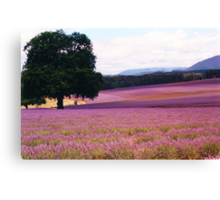 Lavender Farm Canvas Print