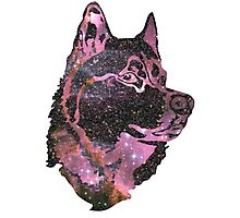 Space Husky Photographic Print