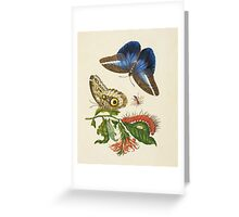 Butterfly and Moth Vintage Greeting Card