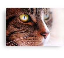 Daydreaming Cat Canvas Print