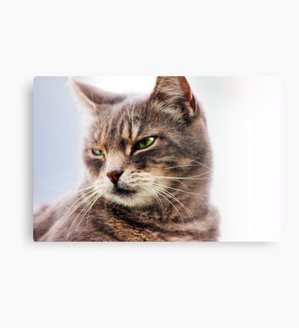 green eyed cat Canvas Print