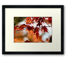 Spring Maple Orange Framed Print