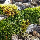 moss - all different by globeboater