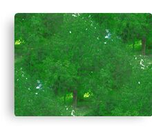 Green Nature Canvas Print