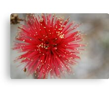 Frosty Red Brush Canvas Print