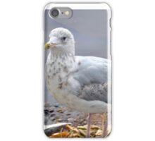Teen Gull........................ iPhone Case/Skin