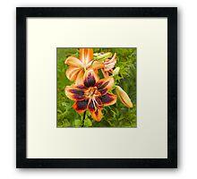 Lilycrest Gardens Showcase 2014 - I Framed Print