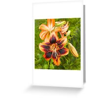 Lilycrest Gardens Showcase 2014 - I Greeting Card
