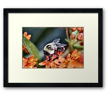 Buzzing About Framed Print