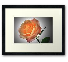 Perfect Rose. Framed Print