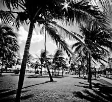 Miami Beach Morning in black & white by Eyecbeauty