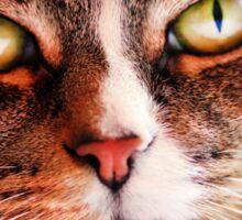 Close up of Cat Sticker