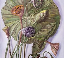 Water Lily Seed Pods by Randy  Burns