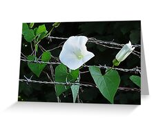 Bouquet on barbed wire Greeting Card