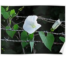 Bouquet on barbed wire Poster