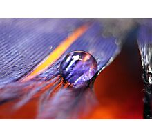 water droplet on feather Photographic Print