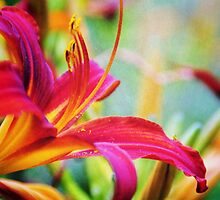 LILY by PIMPINELLA