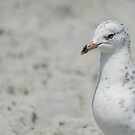 Gull by Rebecca Bryson