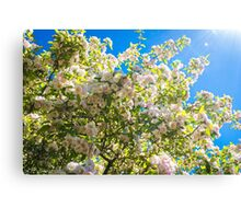 Sunshine Blossoms Canvas Print