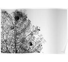 Tree Nest Poster