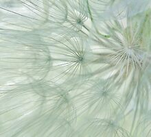 Wispy #4 by Laurie Minor