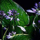 Shady Hosta by Rosemary Sobiera