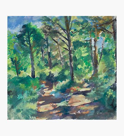 Shady Forest Photographic Print