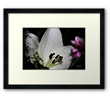 Innocent Lily Framed Print