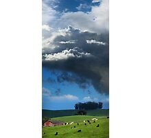 Happy Cows Grazing Photographic Print