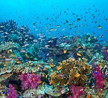 Fantasea Reef by Mark Rosenstein