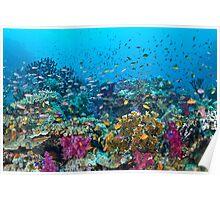 Fantasea Reef Poster