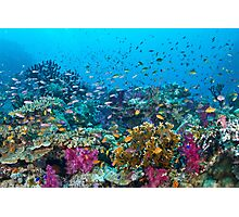 Fantasea Reef Photographic Print
