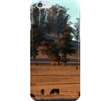 Grazing Cows in the Glow of a Sunset iPhone Case/Skin