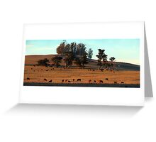 Grazing Cows in the Glow of a Sunset Greeting Card