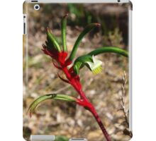 Red & Green Kangaroo Paw iPad Case/Skin