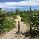 Sandy  Path by Jacker