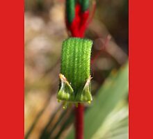 Red & Green Kangaroo Paw - Macro Unisex T-Shirt