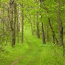 The Green Woodland by lorilee
