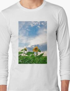 View of field with blooming sunflowers with sunset in background Long Sleeve T-Shirt