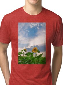 View of field with blooming sunflowers with sunset in background Tri-blend T-Shirt