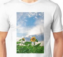 View of field with blooming sunflowers with sunset in background Unisex T-Shirt